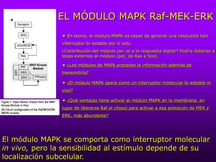 EL MÓDULO MAPK Raf-MEK-ERK