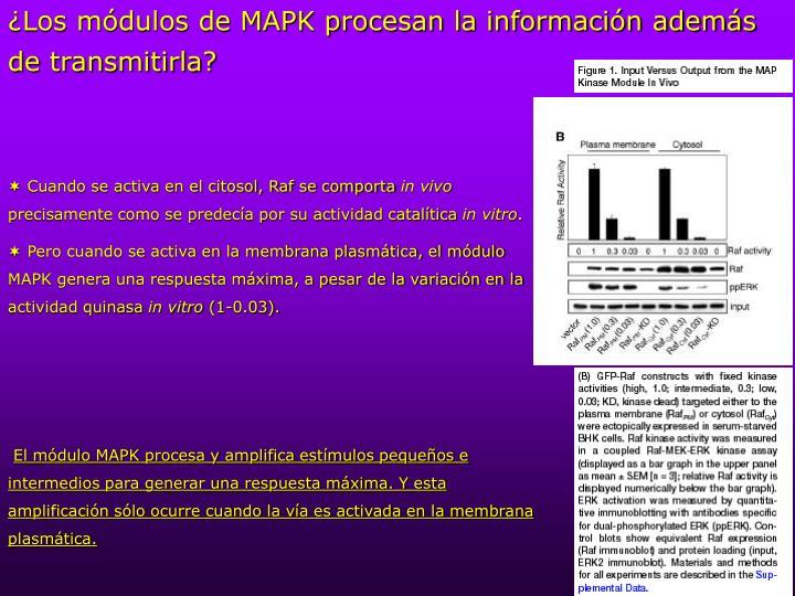 ¿Los módulos de MAPK procesan la información además de transmitirla?