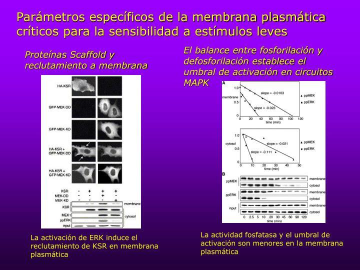 Parámetros específicos de la membrana plasmática críticos para la sensibilidad a estímulos leves