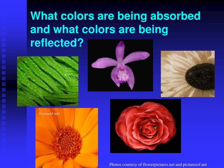 What colors are being absorbed and what colors are being reflected?