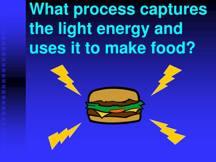 What process captures the light energy and uses it to make food?