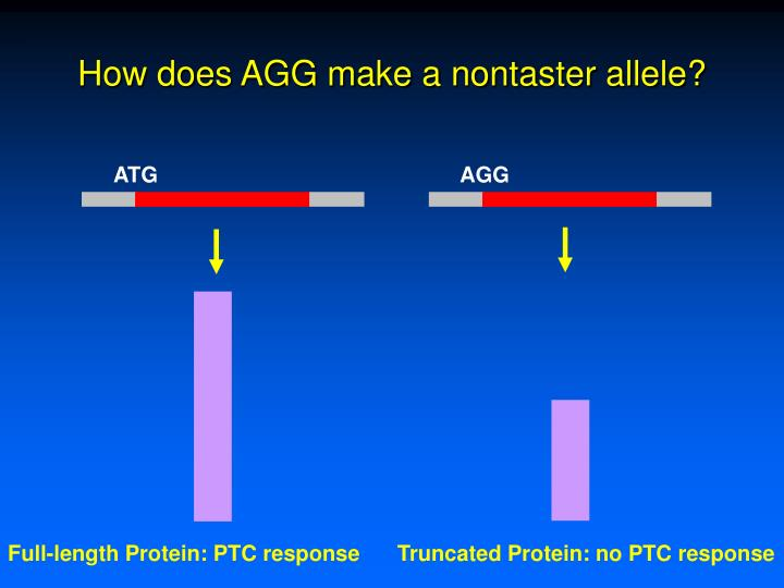 How does AGG make a nontaster allele?