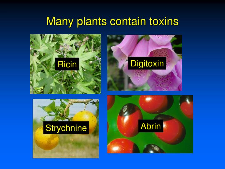 Many plants contain toxins