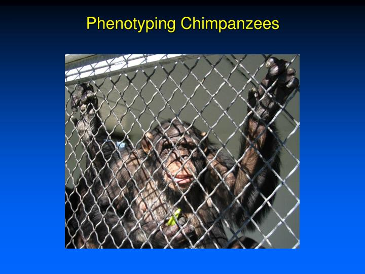 Phenotyping Chimpanzees