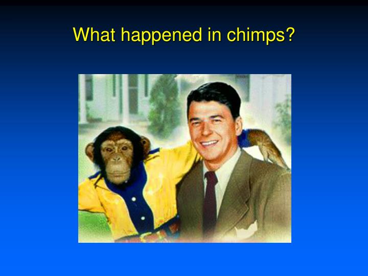 What happened in chimps?