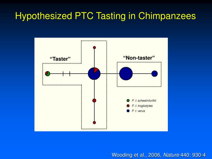 Hypothesized PTC Tasting in Chimpanzees