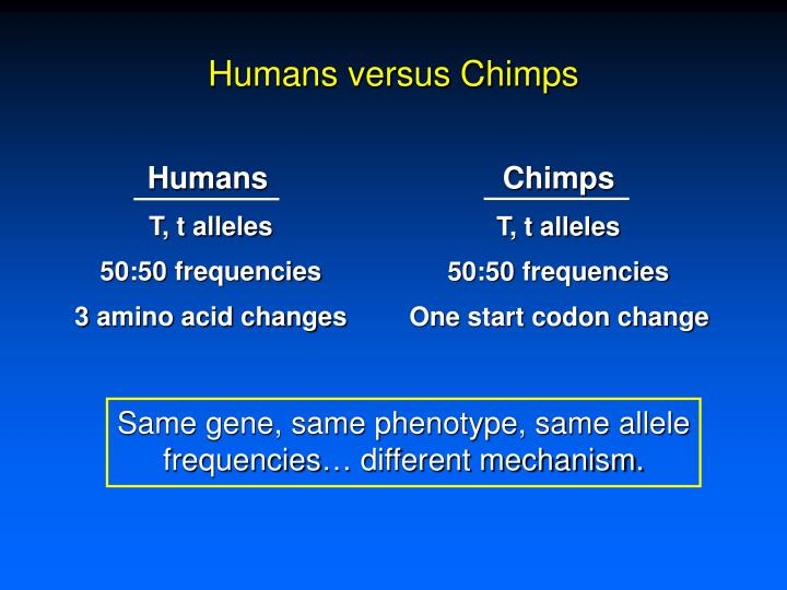 Humans versus Chimps