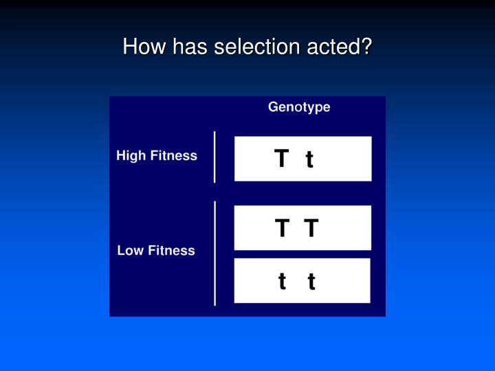 How has selection acted?
