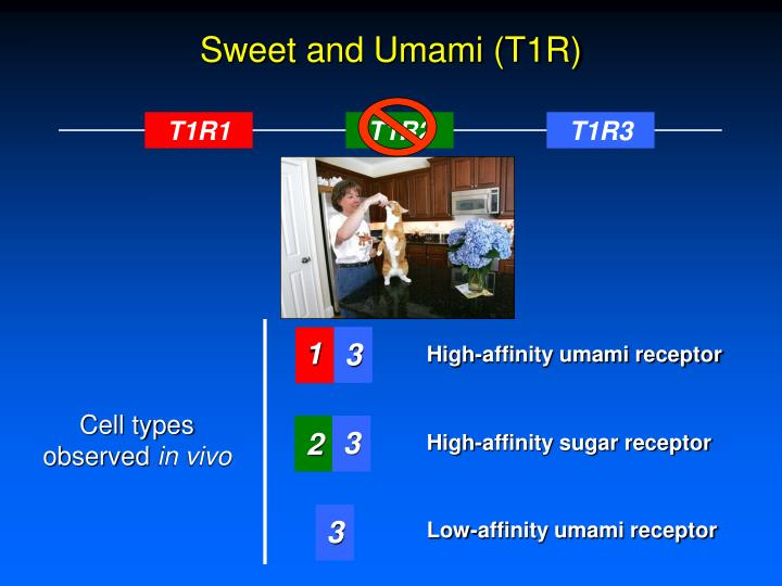 Sweet and Umami (T1R)