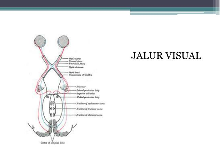 JALUR VISUAL