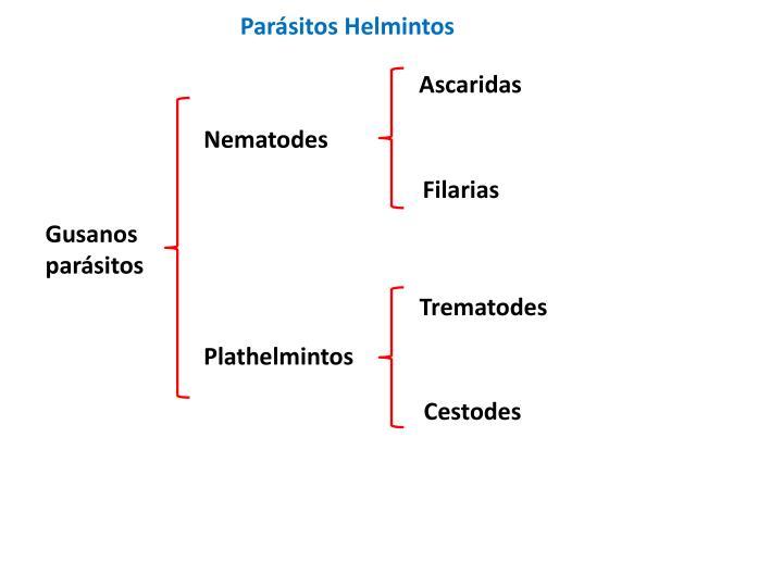 Parásitos Helmintos