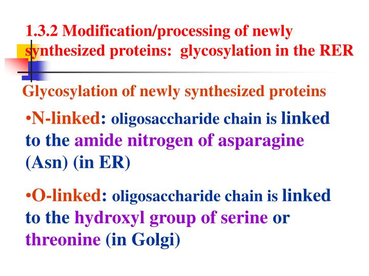1.3.2 Modification/processing of newly synthesized proteins:  glycosylation in the