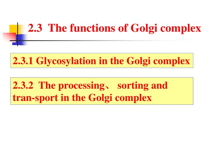 2.3  The functions of Golgi complex
