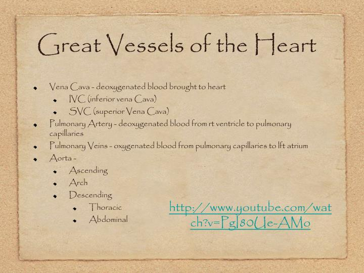 Great Vessels of the Heart