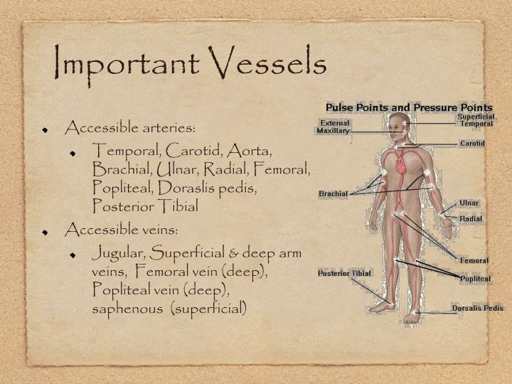 Important Vessels