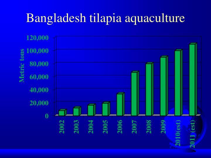 Bangladesh tilapia aquaculture