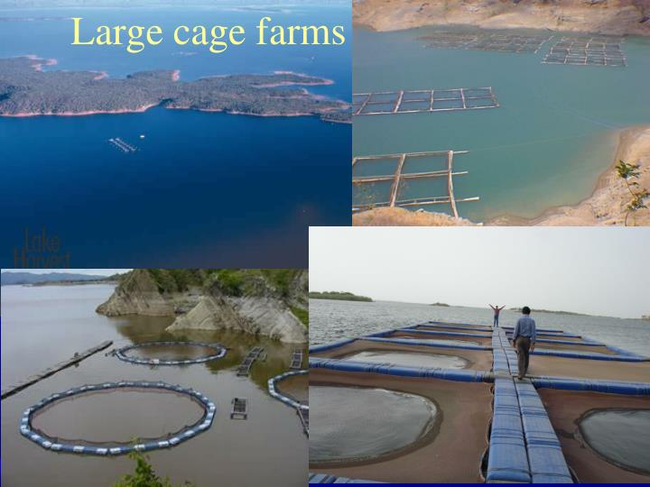 Large cage farms