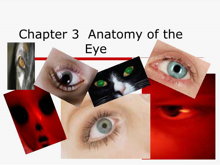 Chapter 3 anatomy of the eye