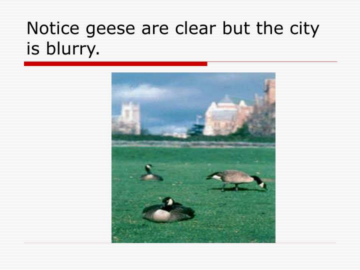 Notice geese are clear but the city is blurry.