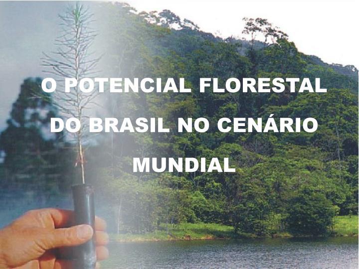 O POTENCIAL FLORESTAL DO BRASIL NO CENÁRIO MUNDIAL