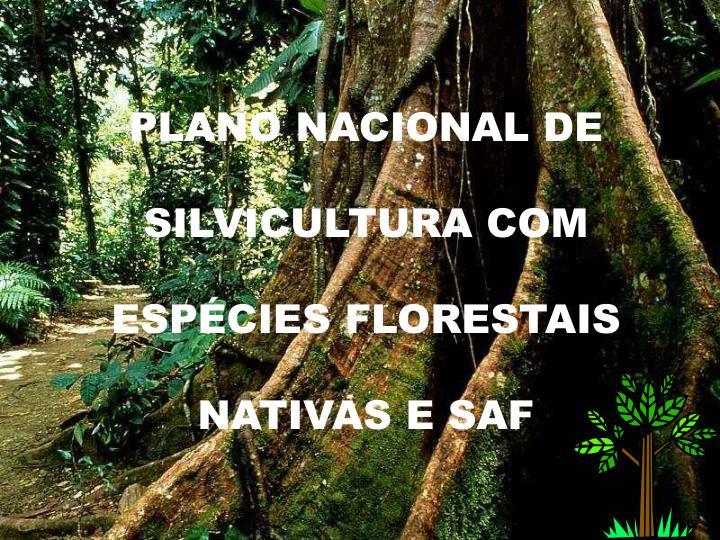 PLANO NACIONAL DE SILVICULTURA COM ESPÉCIES FLORESTAIS NATIVAS E SAF