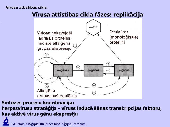 Vīrusu attīstības cikls.