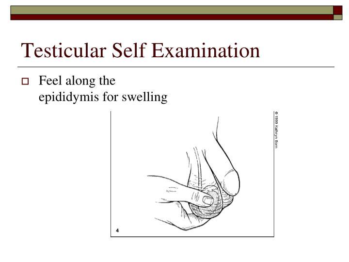Testicular Self Examination