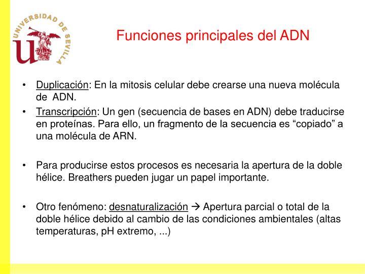 Funciones principales del ADN