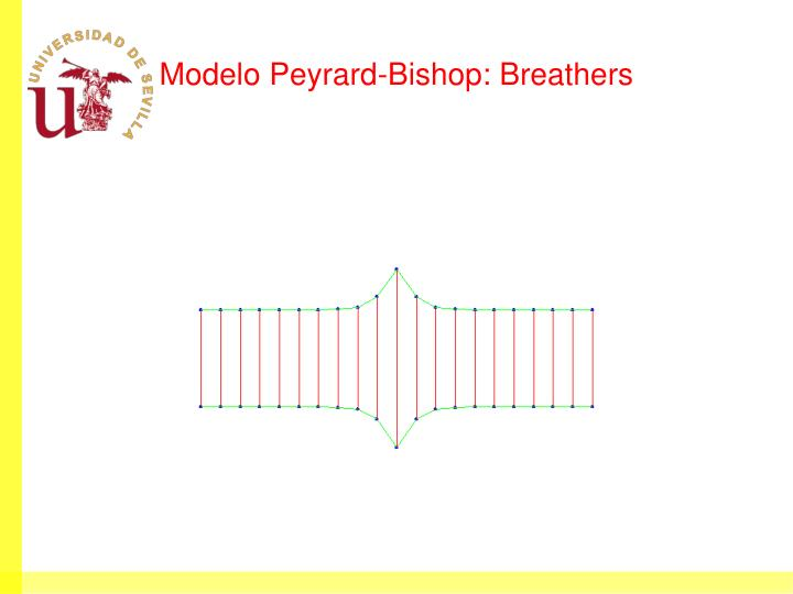 Modelo Peyrard-Bishop: Breathers