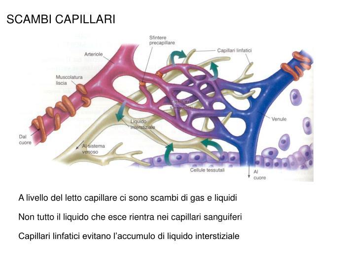 SCAMBI CAPILLARI