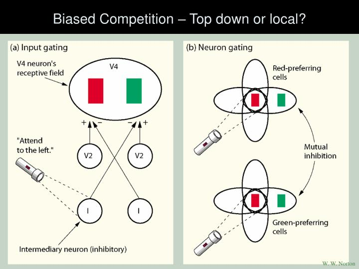 Biased Competition – Top down or local?