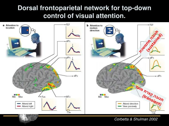 Dorsal frontoparietal network for top-down control of visual attention.