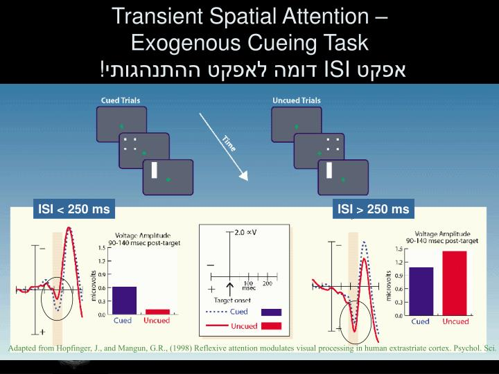 Transient Spatial Attention –