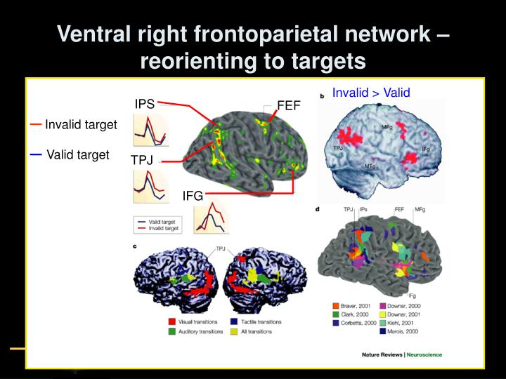 Ventral right frontoparietal network – reorienting to targets