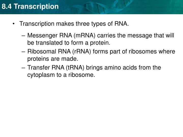 Transcription makes three types of RNA.