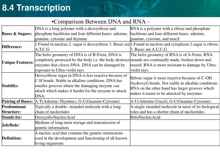 Comparison Between DNA and RNA –