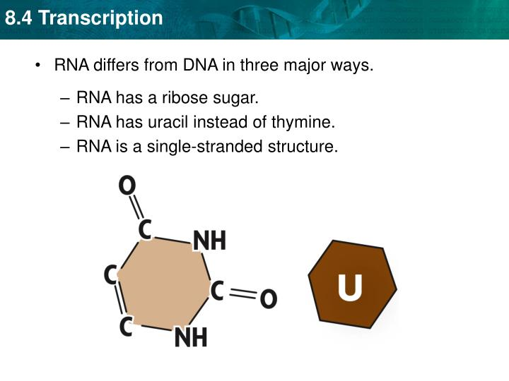 RNA differs from DNA in three major ways.