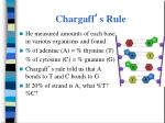 chargaff s rule
