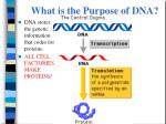 what is the purpose of dna1