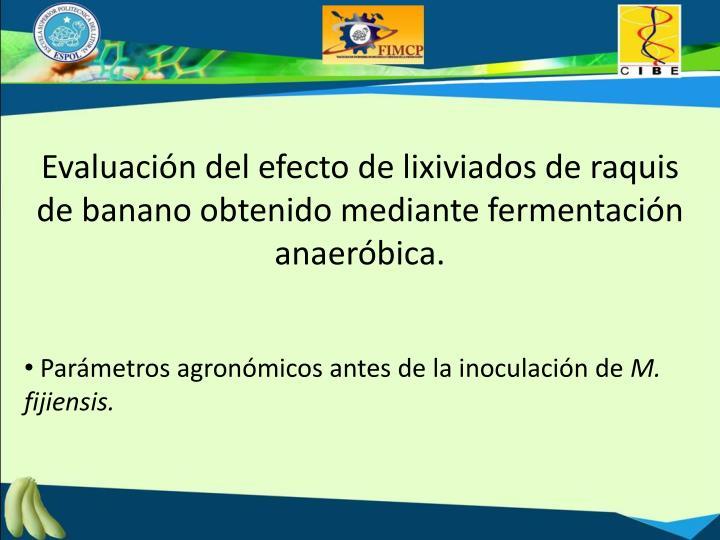 Evaluación del efecto de lixiviados de raquis de banano obtenido mediante fermentación anaeróbica.