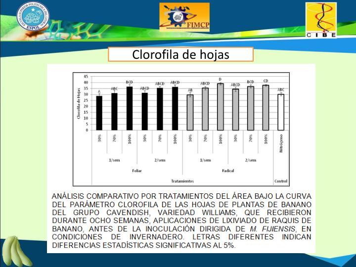 Clorofila de hojas