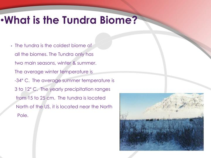 What is the Tundra Biome?