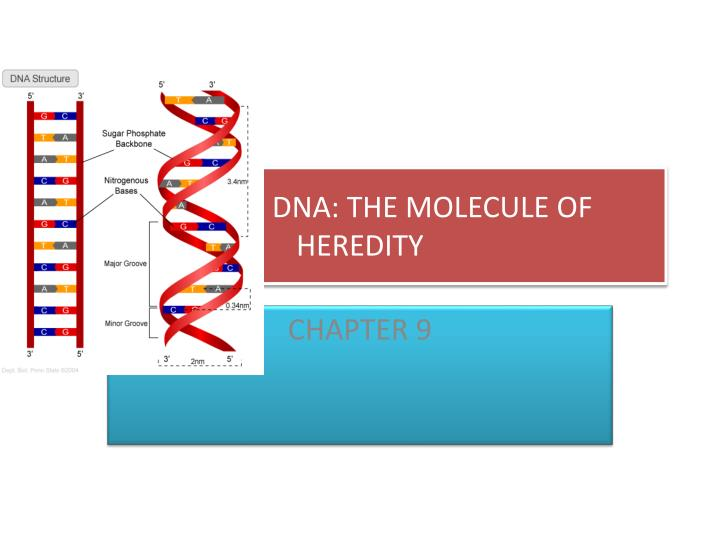 Dna the molecule of heredity