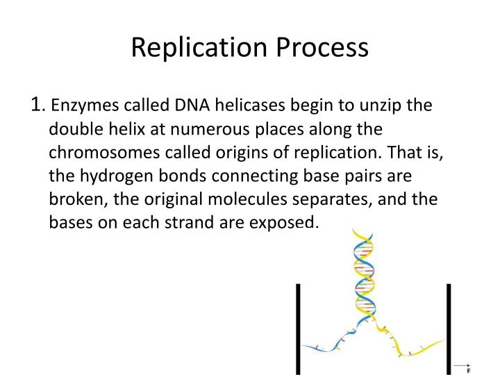 Replication Process