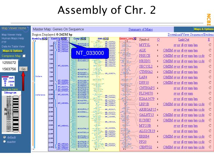 Assembly of Chr. 2