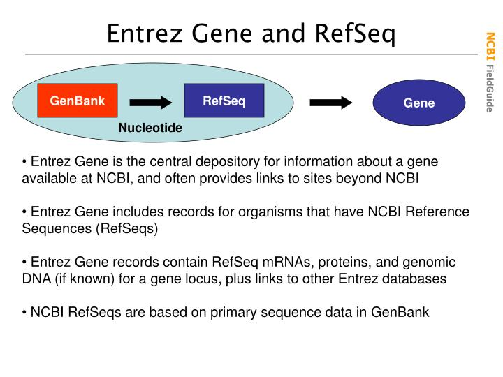Entrez Gene and RefSeq