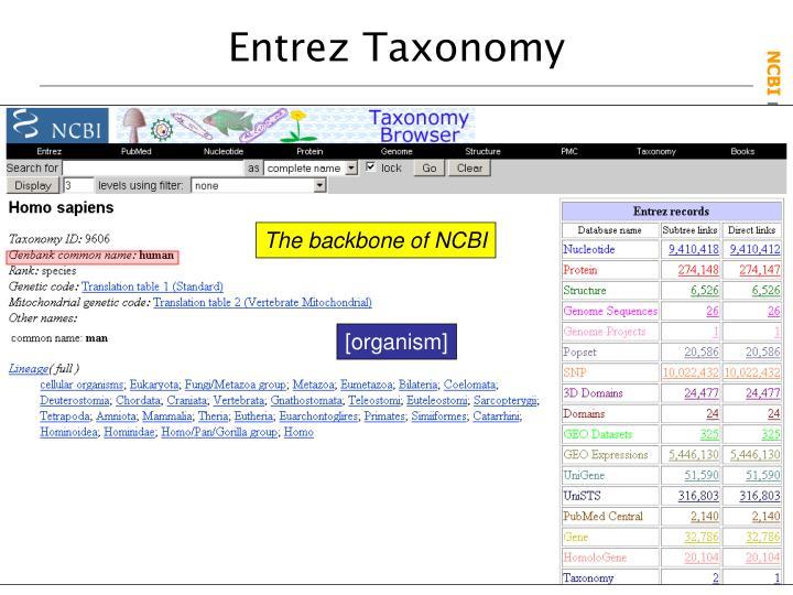 Entrez Taxonomy
