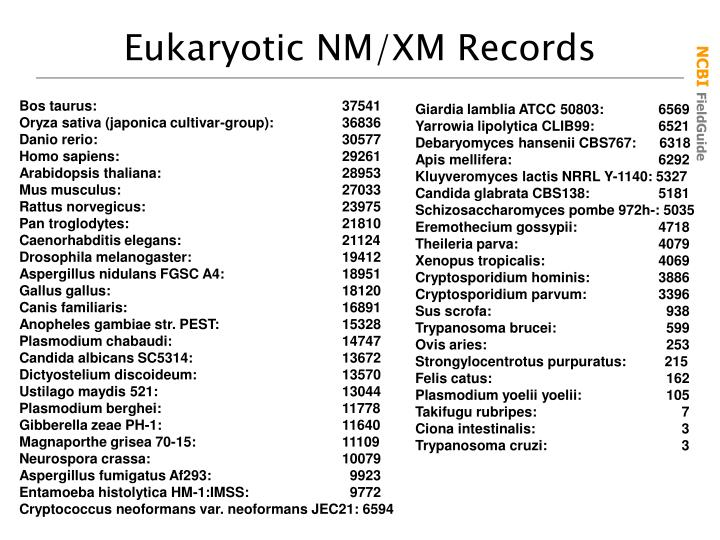 Eukaryotic NM/XM Records