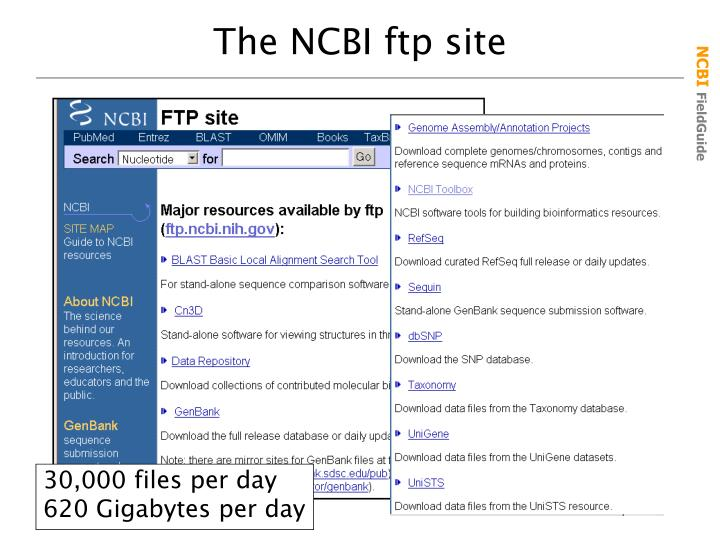 The NCBI ftp site