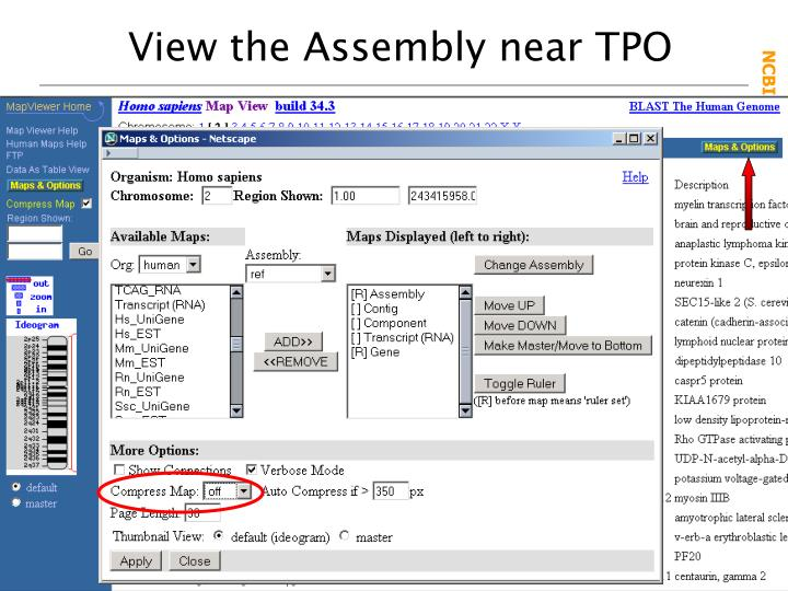 View the Assembly near TPO